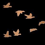 Geese_AvA-V